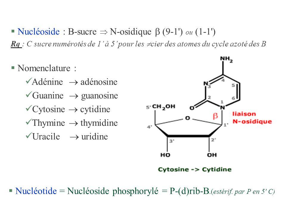 Nucléoside : B-sucre  N-osidique  (9-1 ) ou (1-1 )