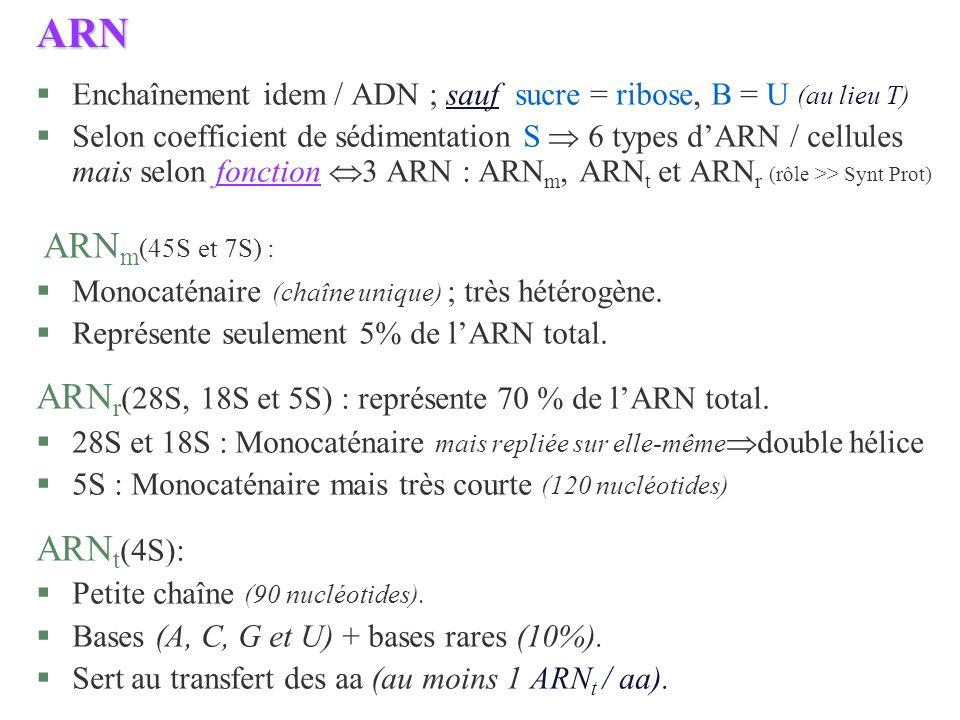 ARN ARNr(28S, 18S et 5S) : représente 70 % de l'ARN total. ARNt(4S):