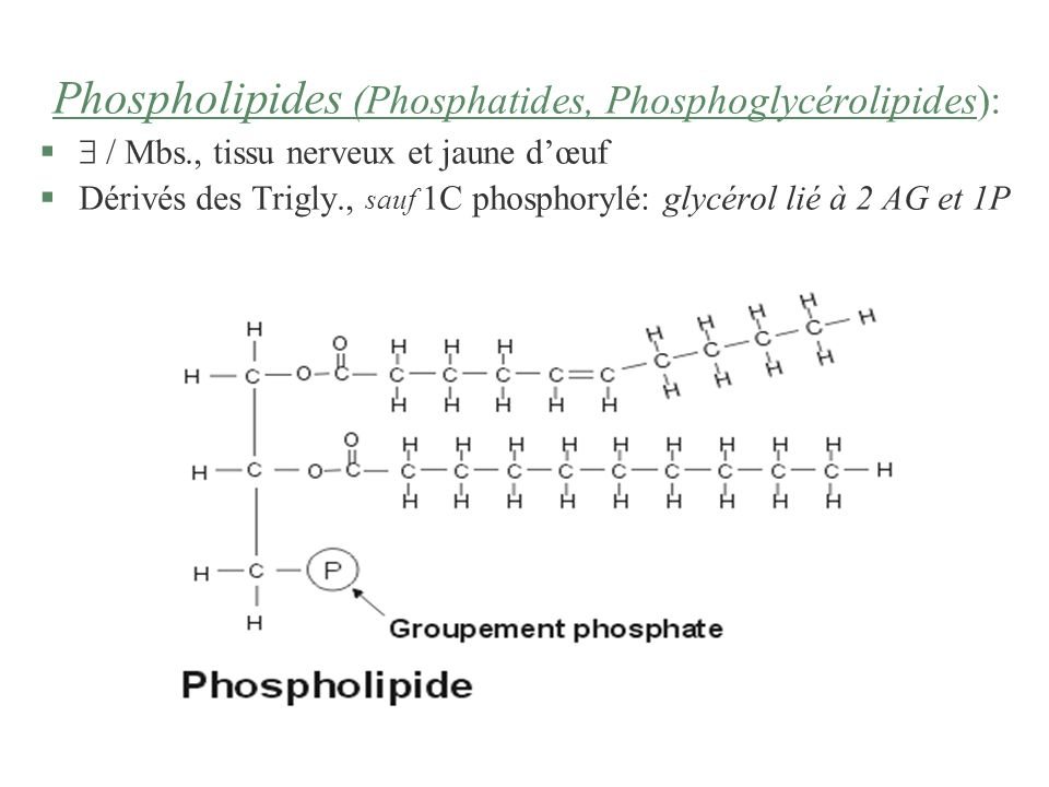 Phospholipides (Phosphatides, Phosphoglycérolipides):