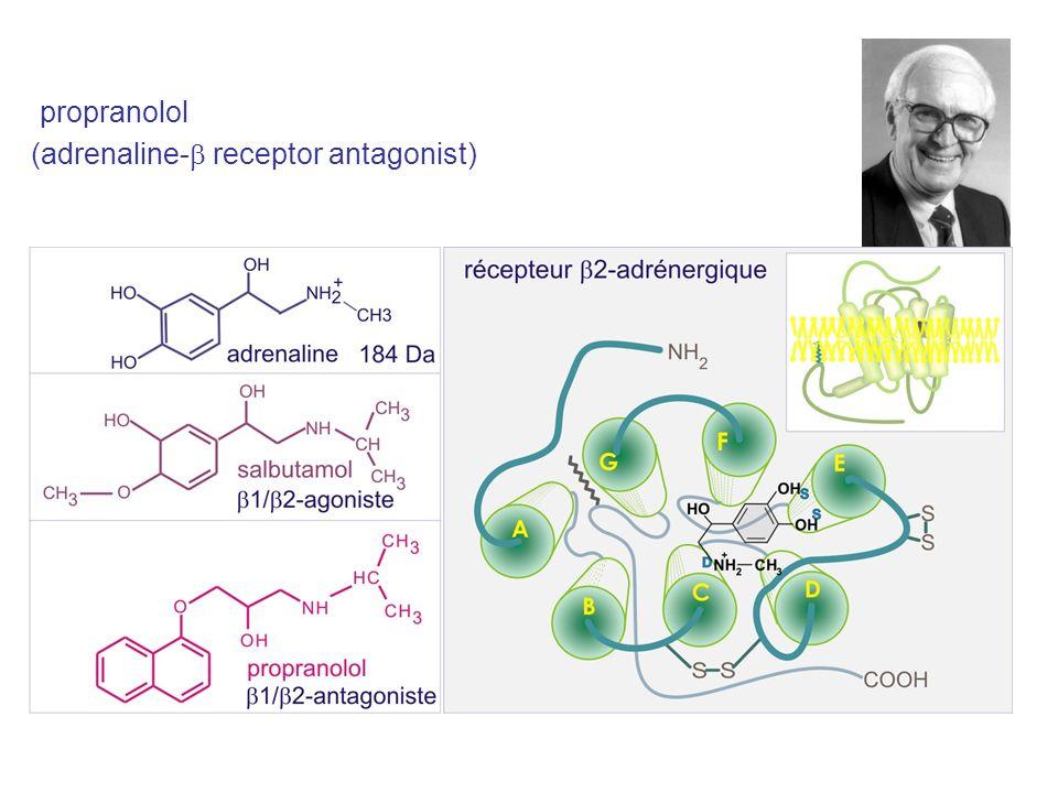 propranolol (adrenaline-b receptor antagonist)