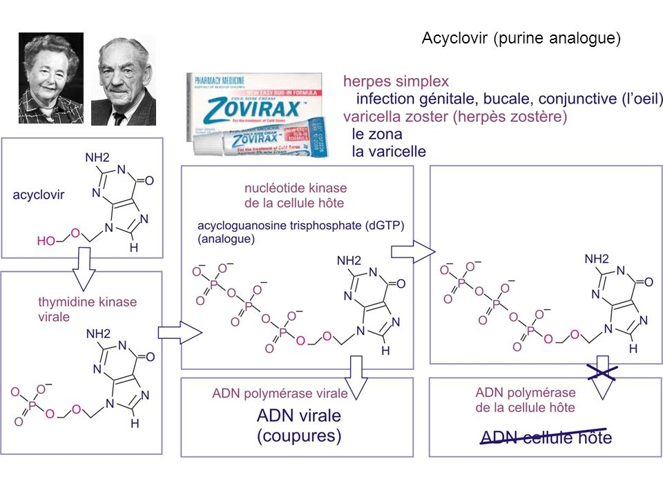 Acyclovir (purine analogue)