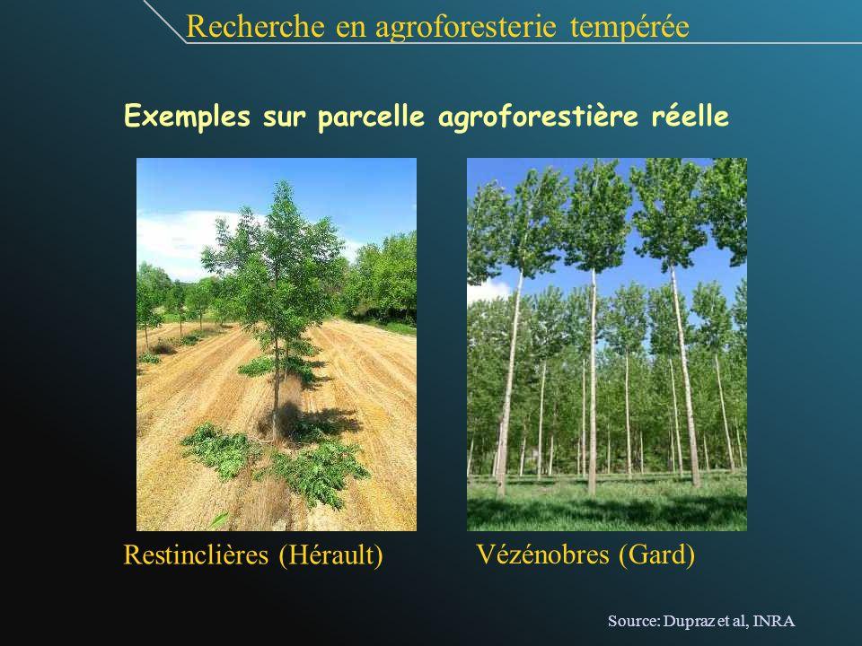 Exemples sur parcelle agroforestière réelle