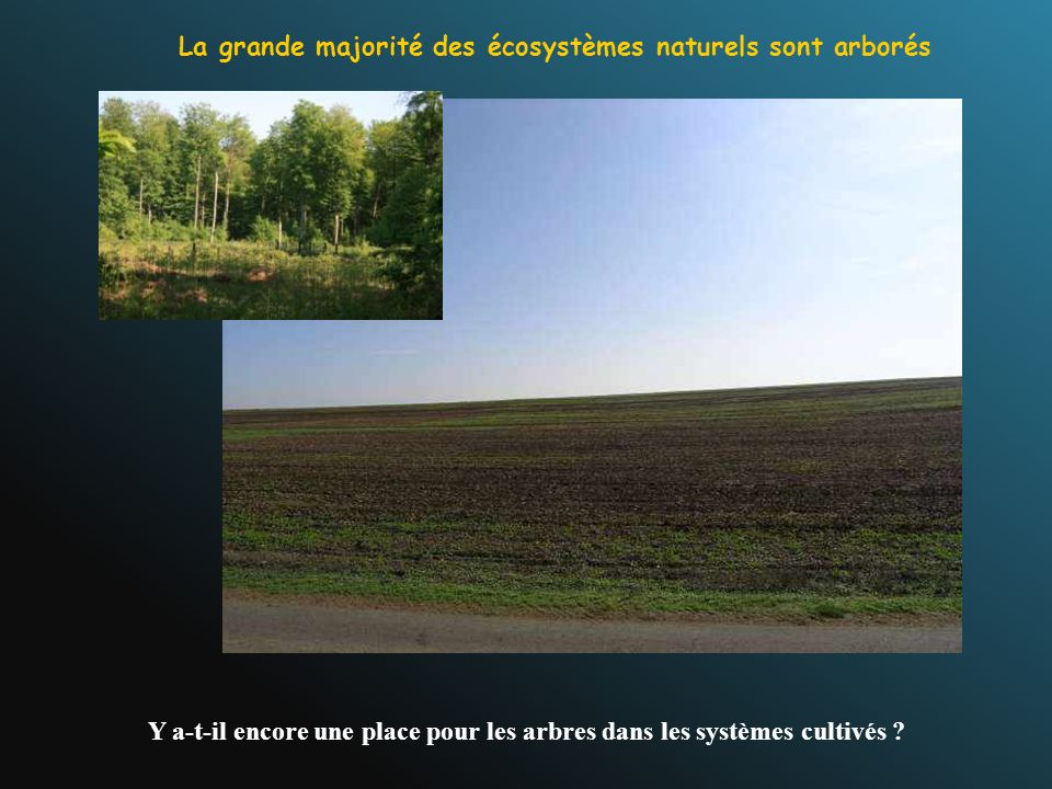 La grande majorité des écosystèmes naturels sont arborés