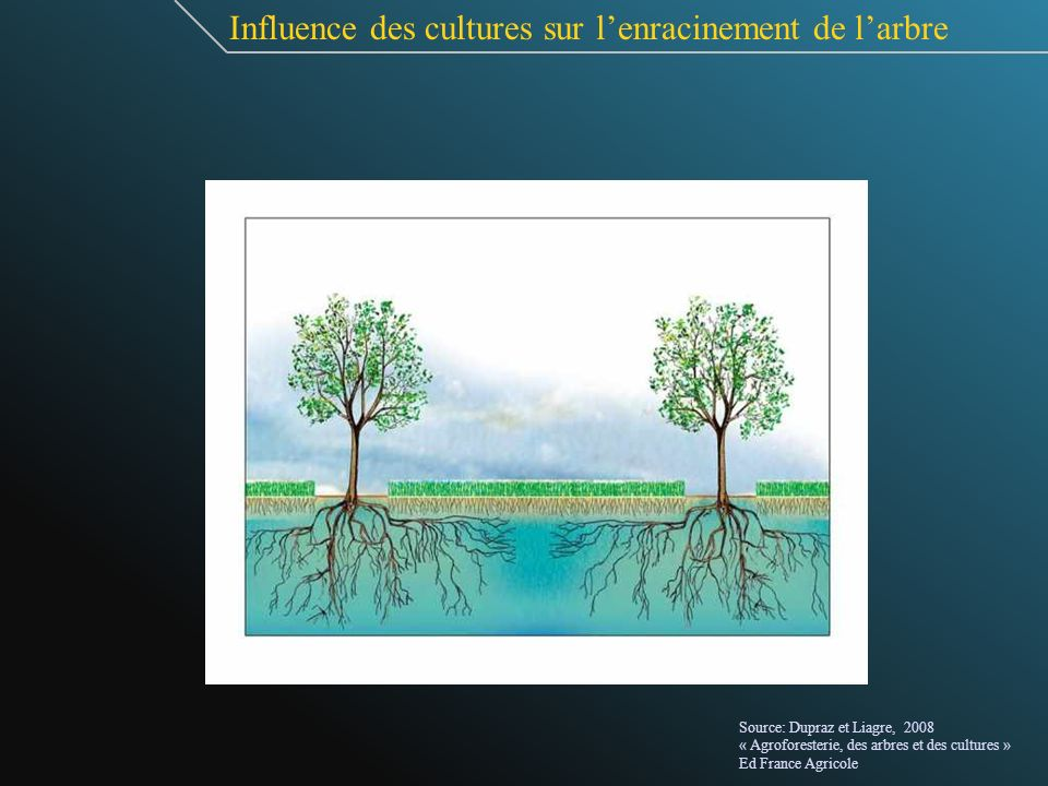 Influence des cultures sur l'enracinement de l'arbre