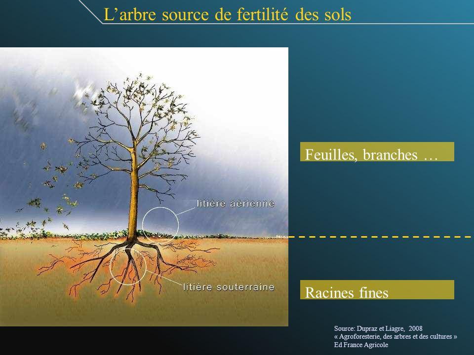 L'arbre source de fertilité des sols