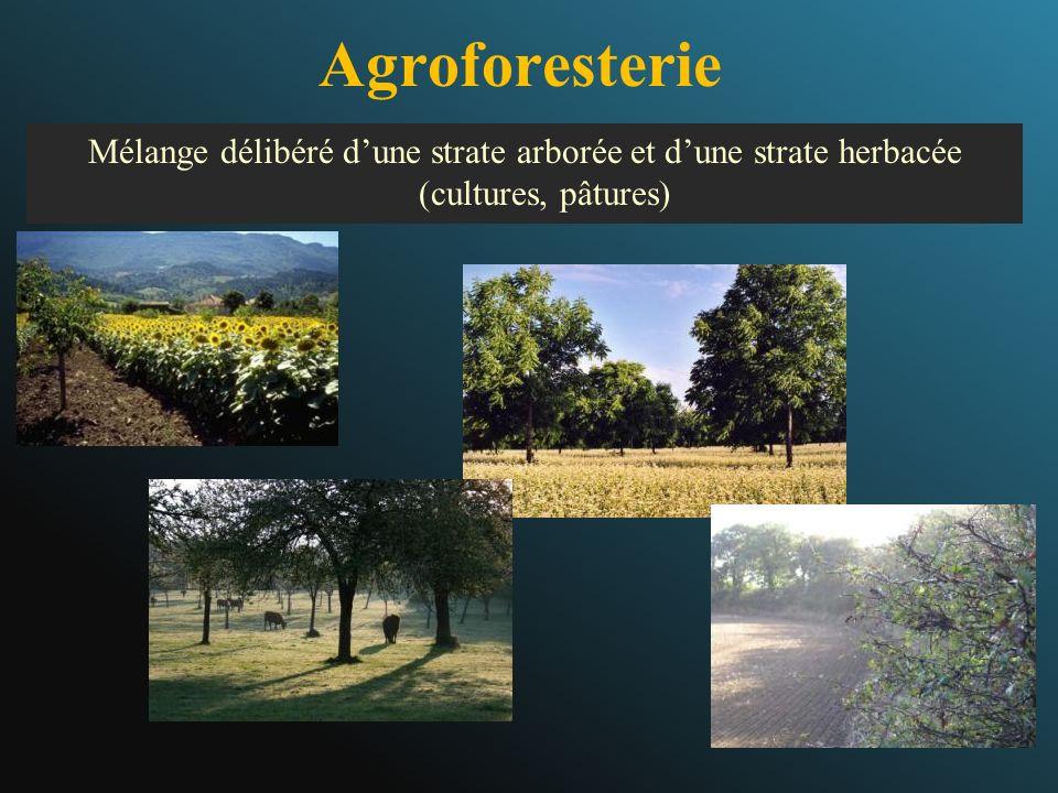 Agroforesterie Mélange délibéré d'une strate arborée et d'une strate herbacée (cultures, pâtures)