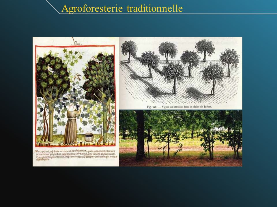 Agroforesterie traditionnelle