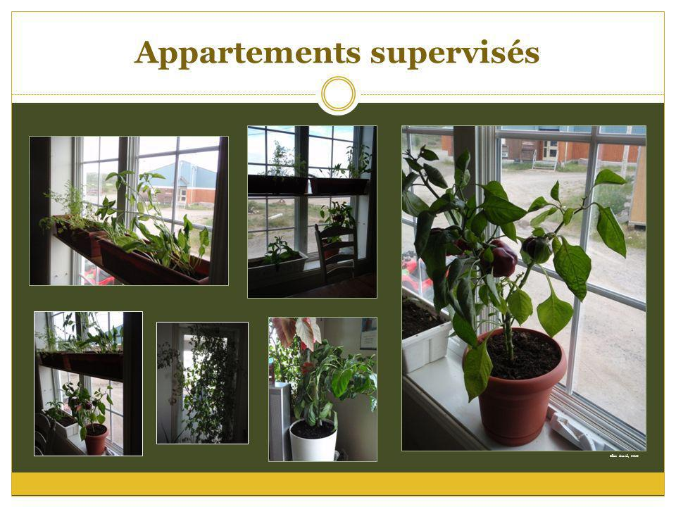 Appartements supervisés