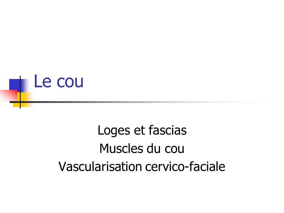 Loges et fascias Muscles du cou Vascularisation cervico-faciale