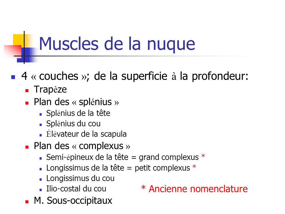 Muscles de la nuque 4 « couches »; de la superficie à la profondeur: