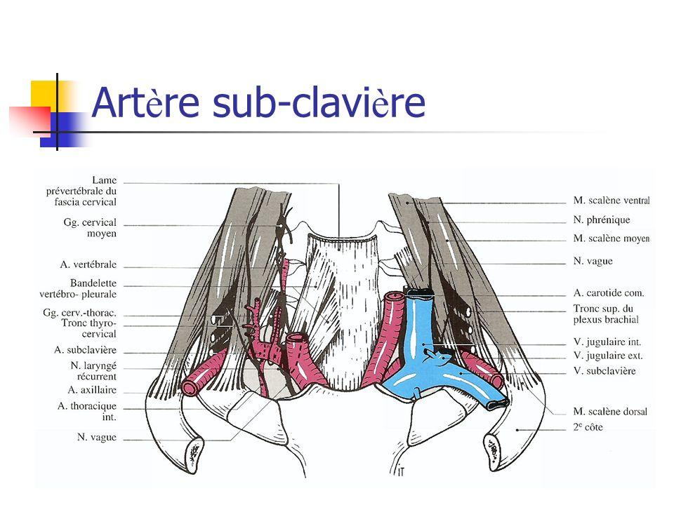 Artère sub-clavière