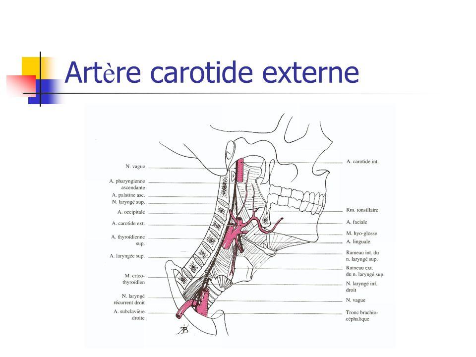 Artère carotide externe