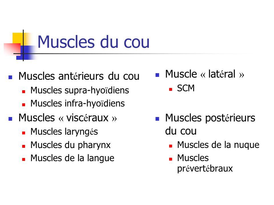 Muscles du cou Muscle « latéral » Muscles antérieurs du cou