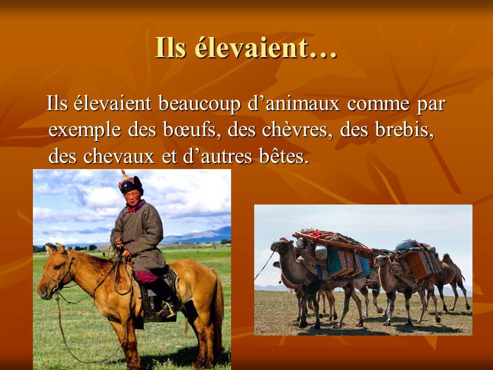 Ils élevaient… Ils élevaient beaucoup d'animaux comme par exemple des bœufs, des chèvres, des brebis, des chevaux et d'autres bêtes.