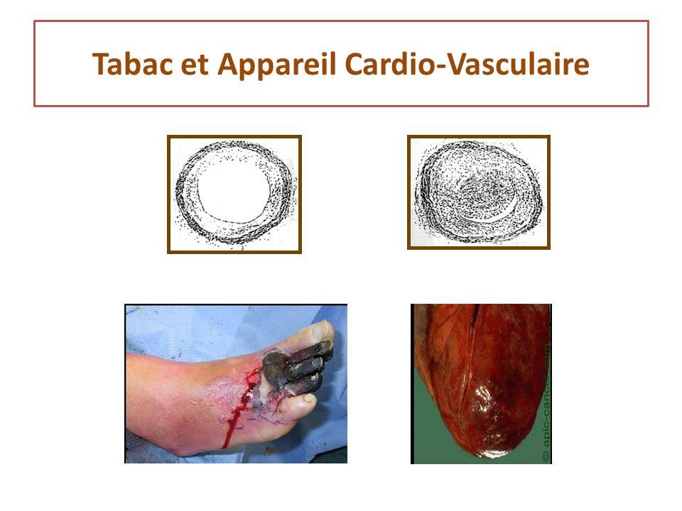 Tabac et Appareil Cardio-Vasculaire