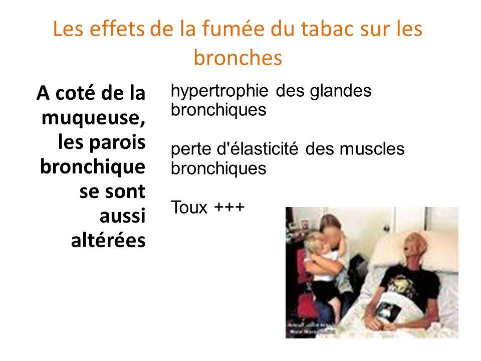 Les effets de la fumée du tabac sur les bronches