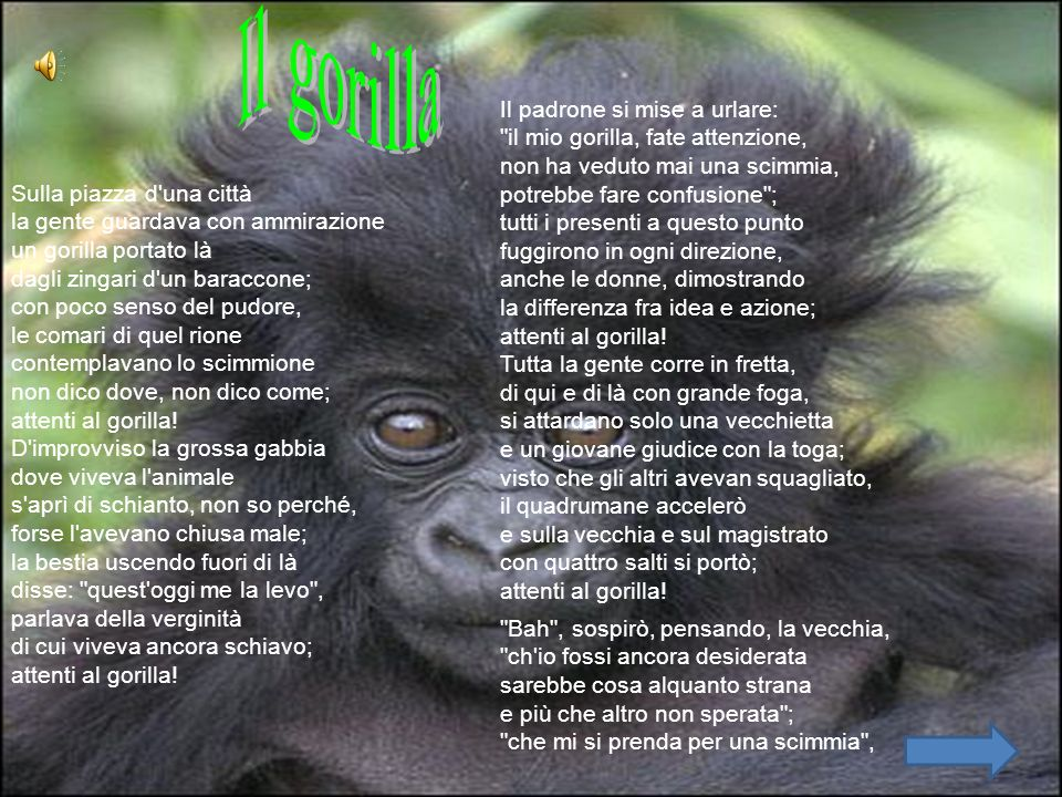 Il gorilla Il padrone si mise a urlare: