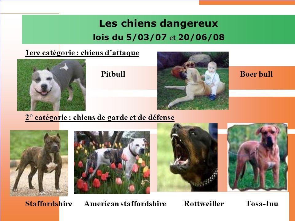 Les chiens dangereux lois du 5/03/07 et 20/06/08