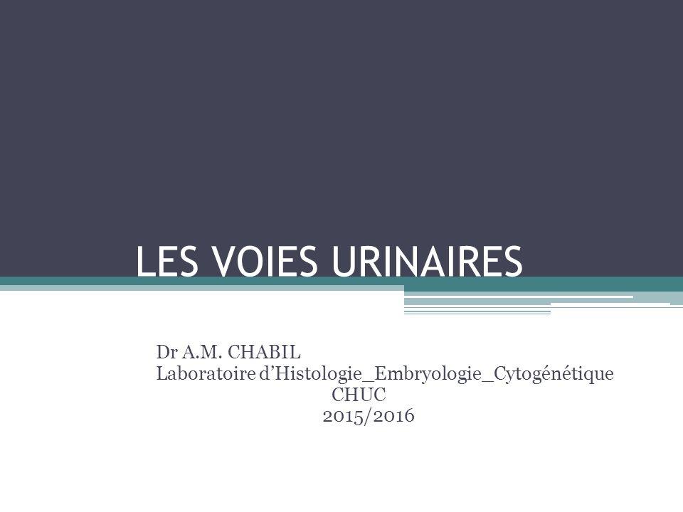 LES VOIES URINAIRES Dr A.M. CHABIL