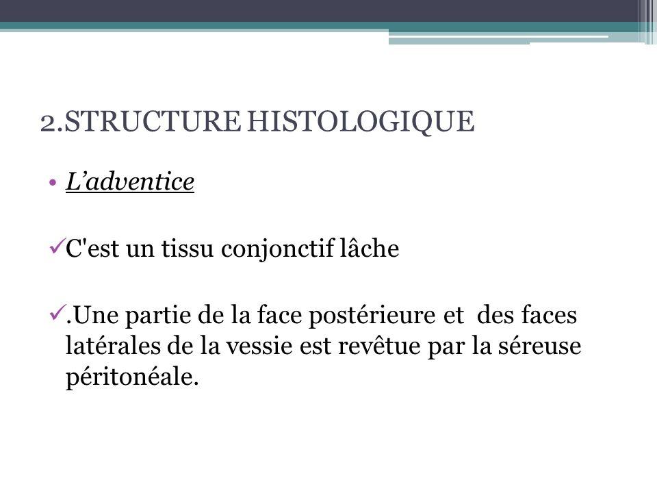 2.STRUCTURE HISTOLOGIQUE