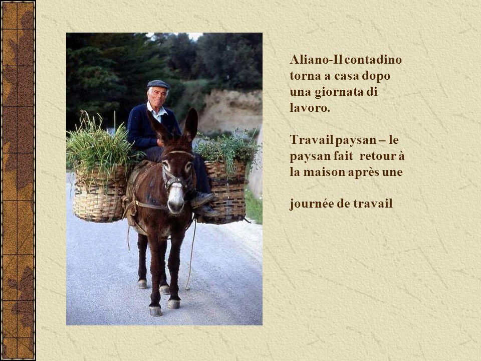 Aliano-Il contadino torna a casa dopo una giornata di lavoro