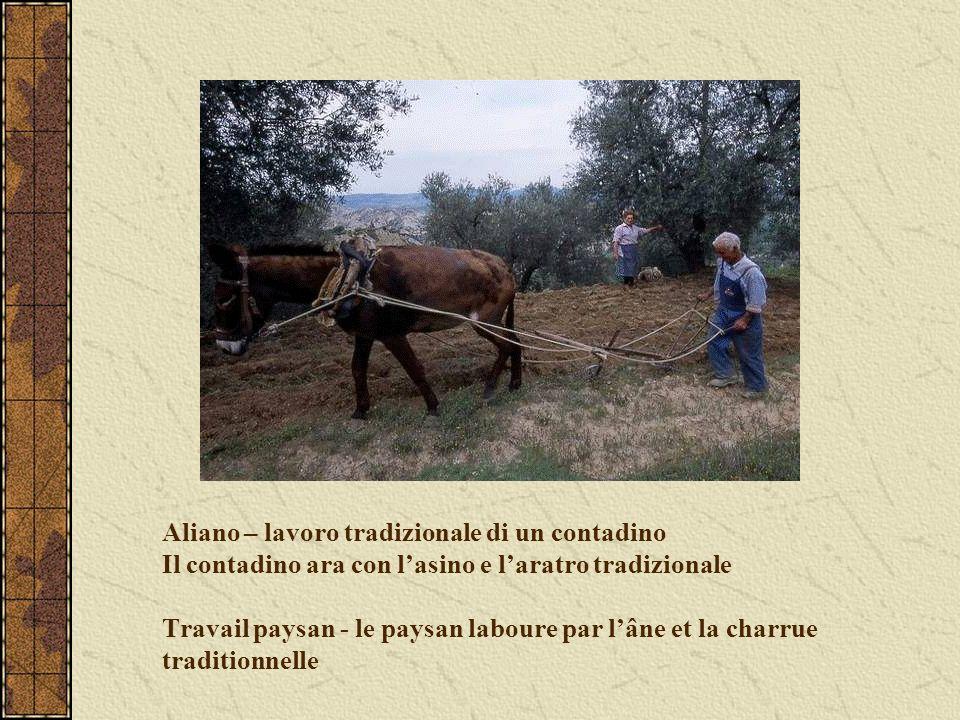 Aliano – lavoro tradizionale di un contadino Il contadino ara con l'asino e l'aratro tradizionale Travail paysan - le paysan laboure par l'âne et la charrue traditionnelle