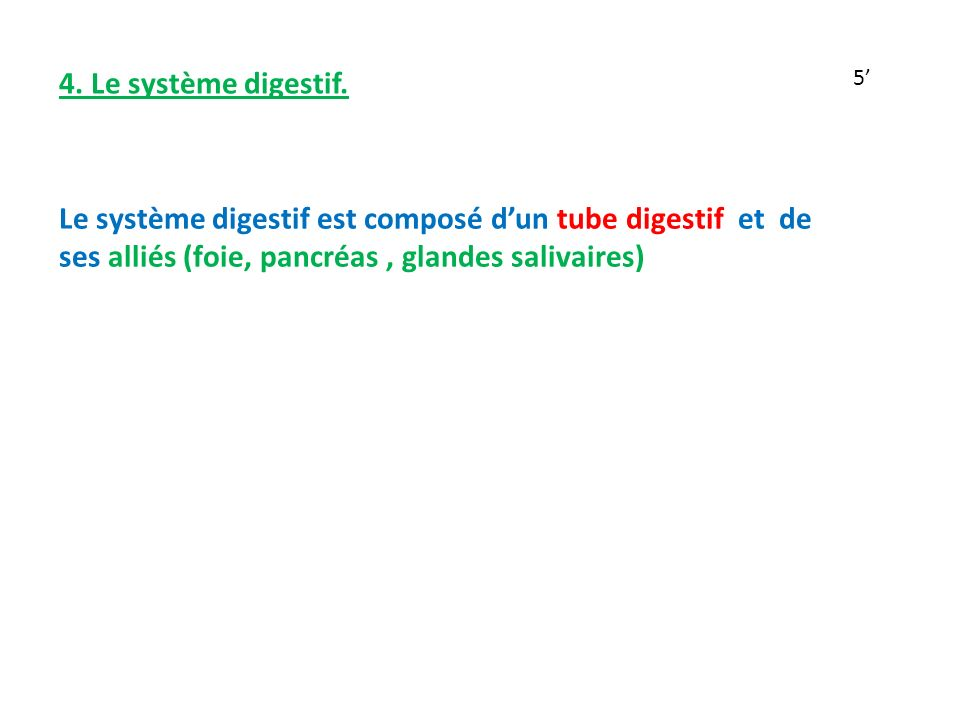 4. Le système digestif.