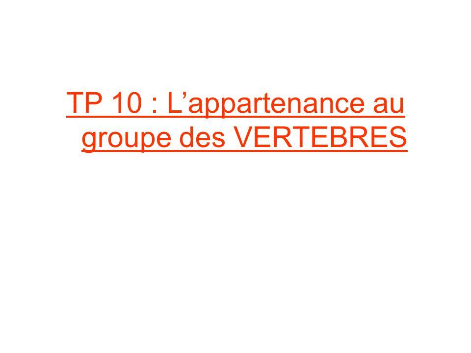 TP 10 : L'appartenance au groupe des VERTEBRES