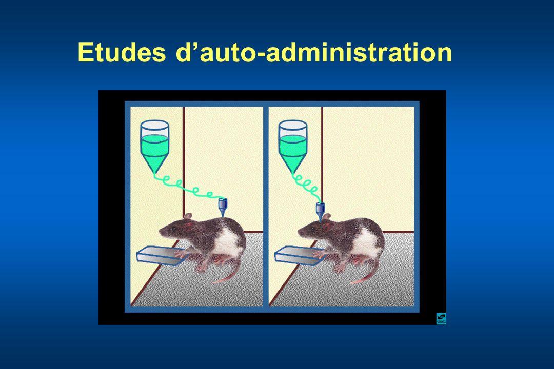 Etudes d'auto-administration