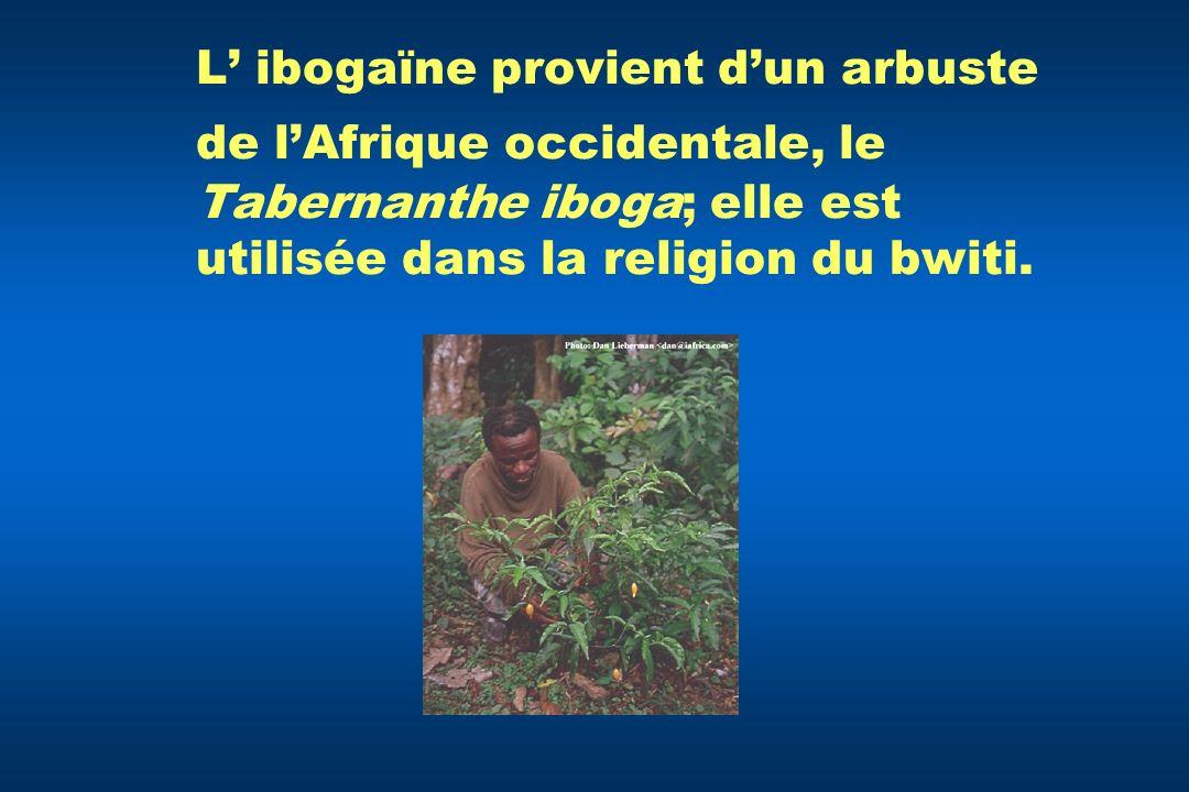 L' ibogaïne provient d'un arbuste de l'Afrique occidentale, le Tabernanthe iboga; elle est utilisée dans la religion du bwiti.