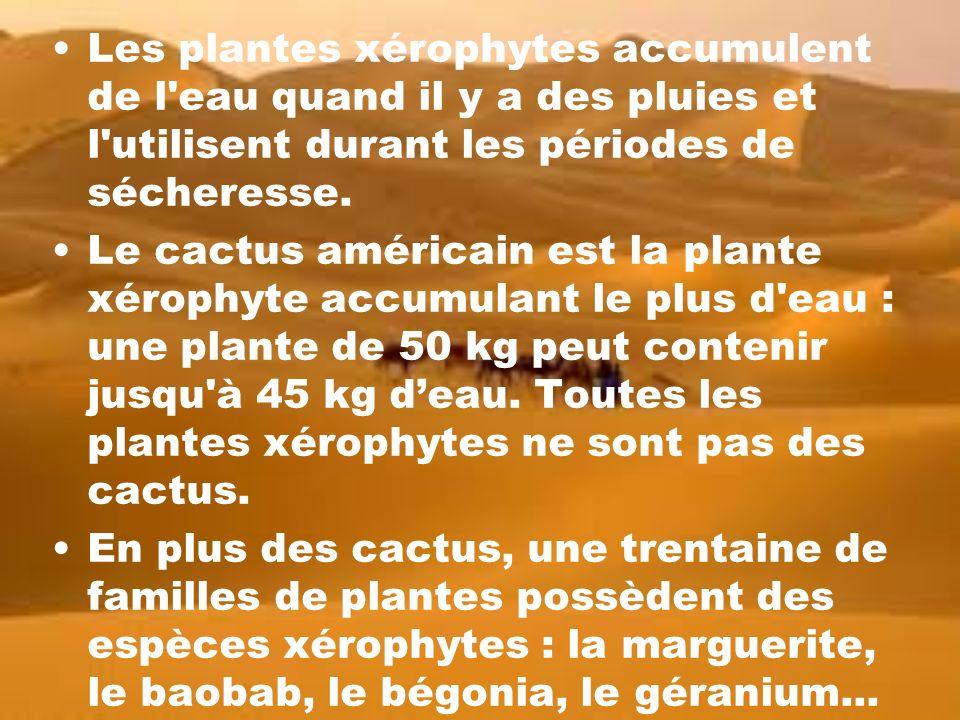 plantes et adaptation les hydrophytes et les x rophytes ppt video online t l charger. Black Bedroom Furniture Sets. Home Design Ideas