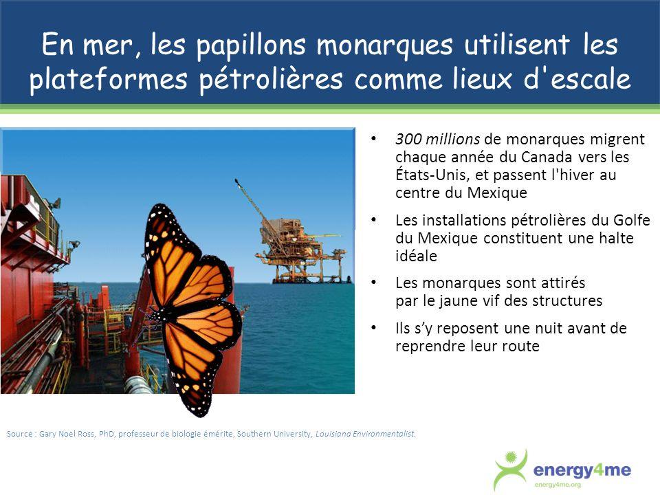 En mer, les papillons monarques utilisent les plateformes pétrolières comme lieux d escale