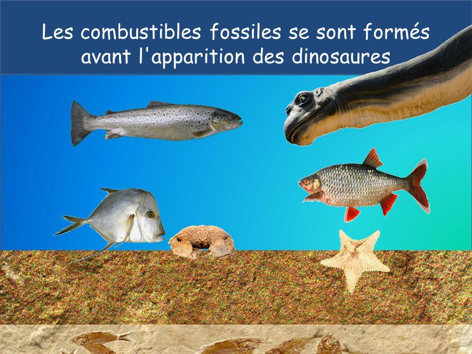 Les combustibles fossiles se sont formés avant l apparition des dinosaures