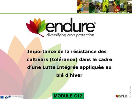 © ENDURE, February 2007 FOOD QUALITY AND SAFETY © ENDURE, February 2007 FOOD QUALITY AND SAFETY Importance de la résistance des cultivars (tolérance) dans.