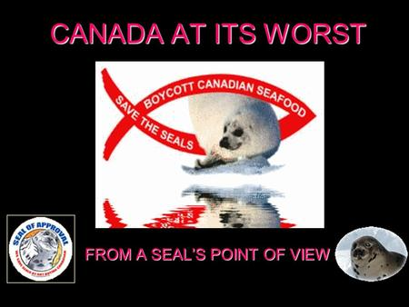 CANADA AT ITS WORST FROM A SEALS POINT OF VIEW SOS, HELP! WE ARE BEING ASSASSINATED. SOS, on est en train de nous assassiner ! SOS, on est en train de.