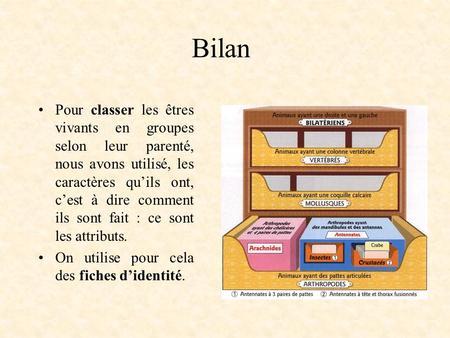 la classification actuelle des tres vivants ppt video online t l charger. Black Bedroom Furniture Sets. Home Design Ideas