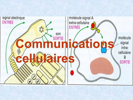 Communications cellulaires