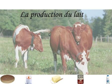 La production du lait.