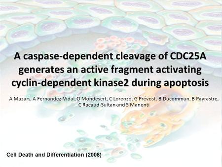 A caspase-dependent cleavage of CDC25A generates an active fragment activating cyclin-dependent kinase2 during apoptosis A Mazars, A Fernandez-Vidal, O.