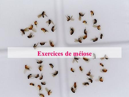 Exercices de méiose.