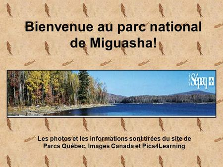 Bienvenue au parc national de Miguasha!