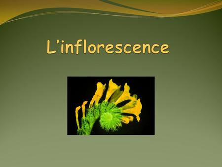 L'inflorescence.