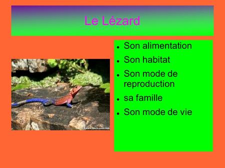Le Lézard Son alimentation Son habitat Son mode de reproduction