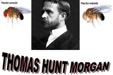 THOMAS HUNT MORGAN.