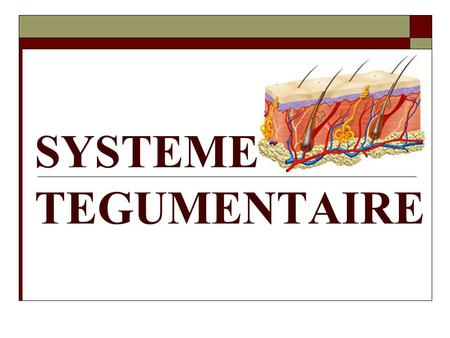 SYSTEME TEGUMENTAIRE.