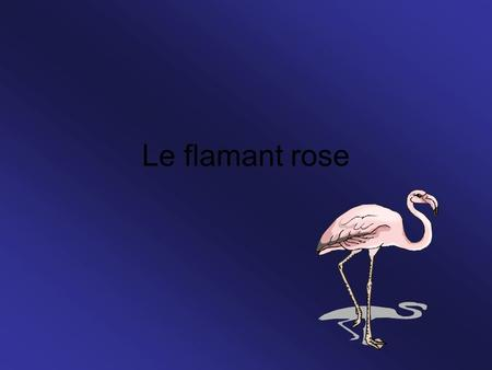 Le flamant rose.