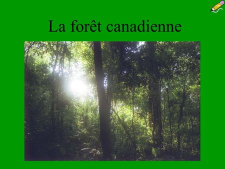 La forêt canadienne.
