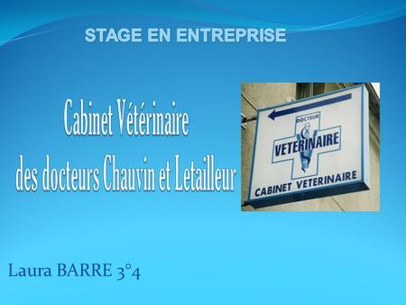 Rapport De Stage En Entreprise Clinique Veterinaire Dr Bouche