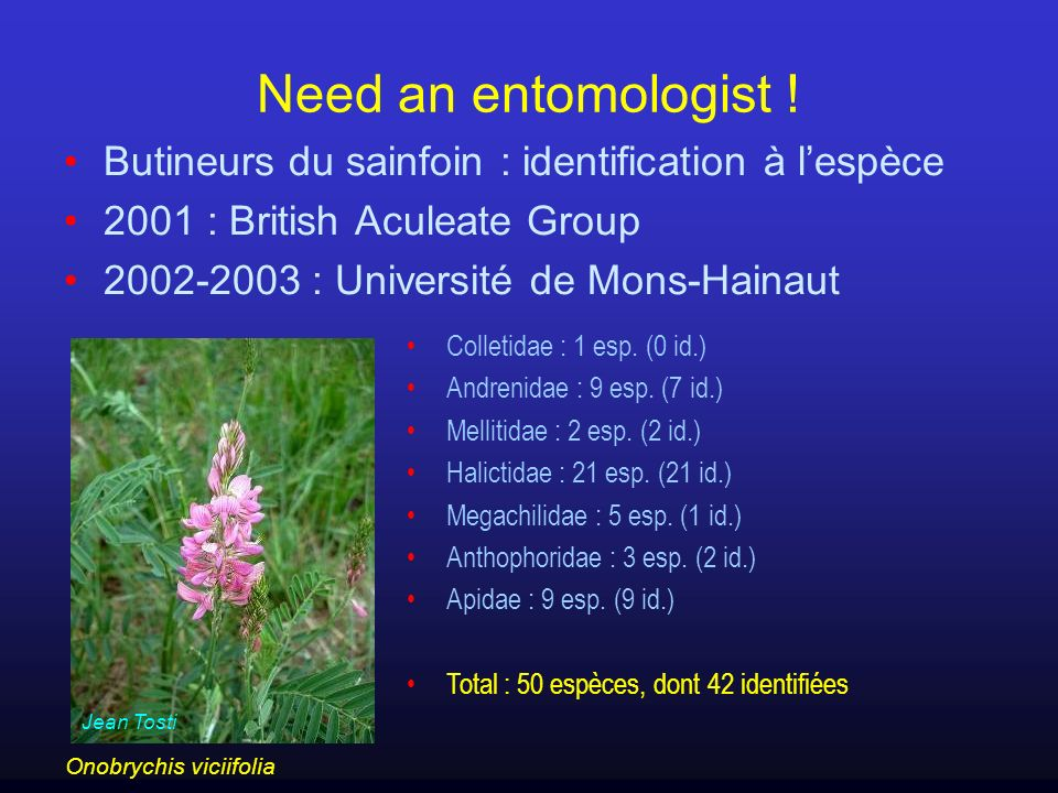 Need an entomologist ! Butineurs du sainfoin : identification à l'espèce. 2001 : British Aculeate Group.