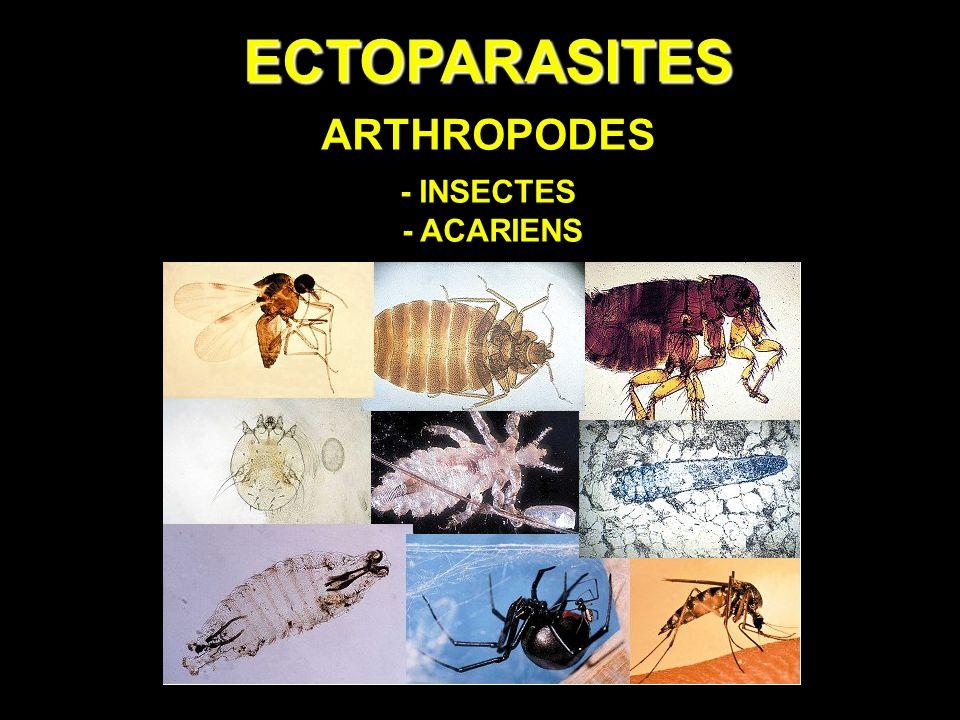 les arthropodes parasites de l homme)